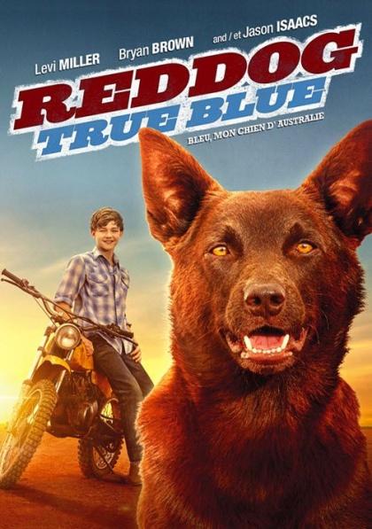 Rudý pes: Blue / Red Dog: True Blue (2016)